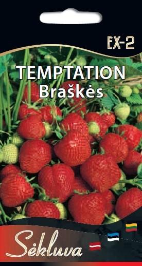 Braškės Temptation EX-2