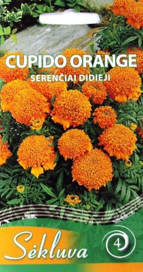 Serenčiai Cupido Orange (4grupė)