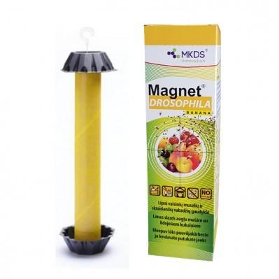 Vaisinių muselių lipni gaudyklė Magnet Drosophila (24)