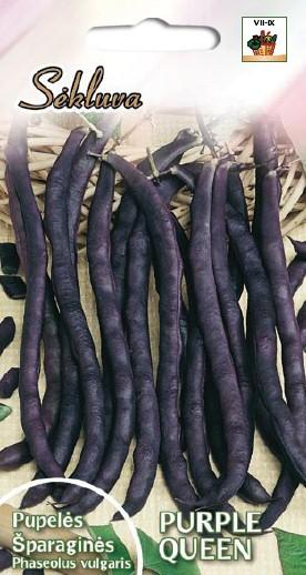Pupelės šparaginės žemaūgės Purple Queen (Baltic)