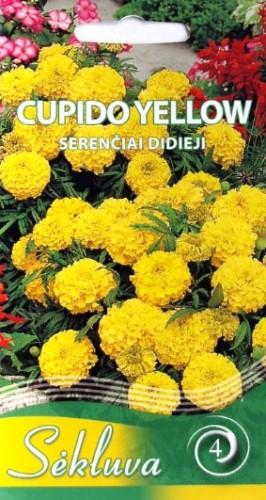 Serenčiai didieji Cupido Yellow (4grupė)