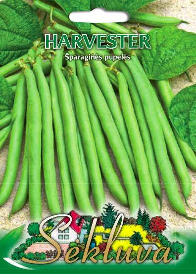 Pupelės žemaūgės Harvester (Sodžius)