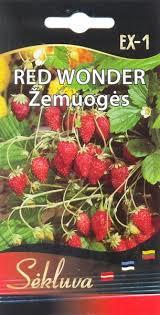 Žemuogės Red Wonder EX-1